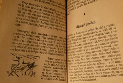 zápisník 13 bobříků3.jpg